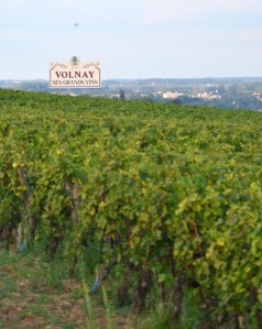 Welcome to Volnay!