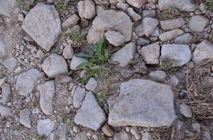Limestone from Volnay Clos des Chenes Premier Cru Vineyard