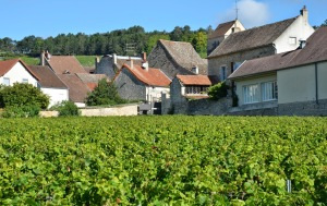 My happy home in Volnay (red roof, center) viewed from a 1er cru vineyard