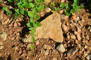 Volnay 1er cru Les Fremiets rocks and dirt