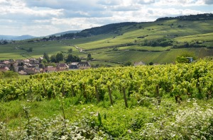 View from Pommard 1er cru vineyard--Pommard in center, Volnay in distance
