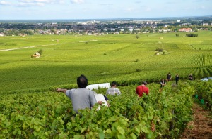 View from Beaune 1er cru vineyard Les Aigrots