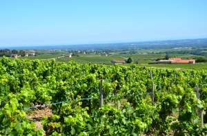 Bel Aire Vineyard, Fleurie, Beaujolais